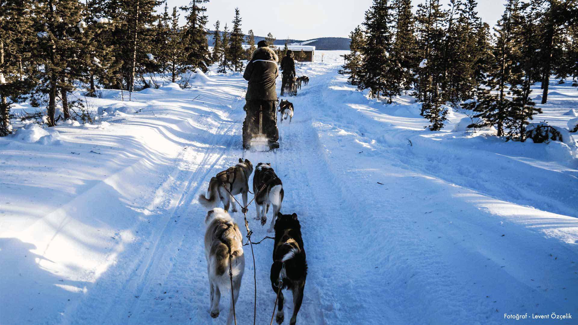 Samilerin Laponya'si