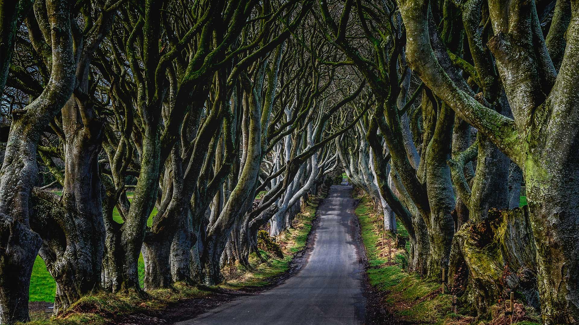 Westeros'ta Tatil: Game of Thrones'un İzleriyle İrlanda