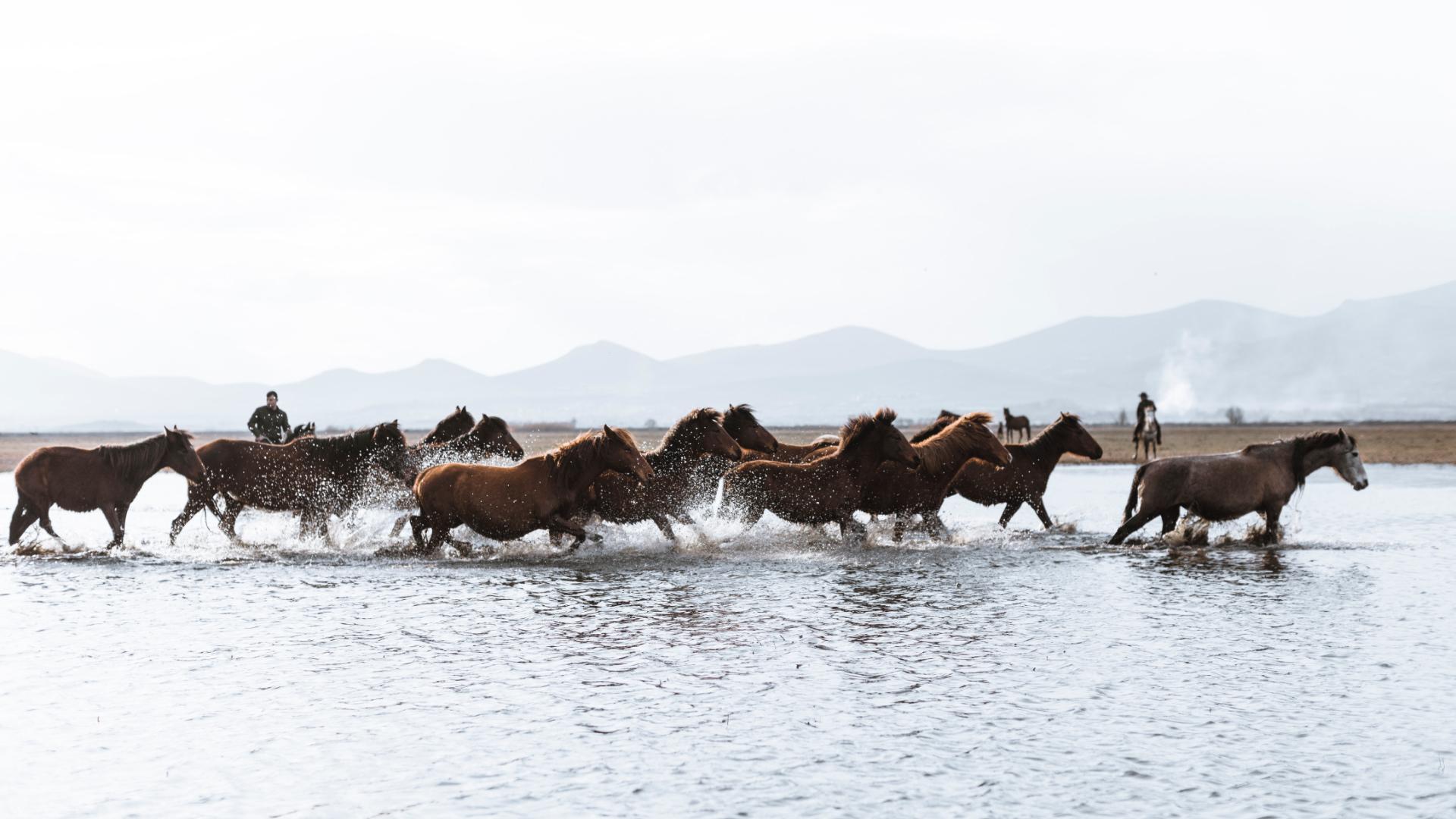Kayseri'nin Efsane Yılkı Atları