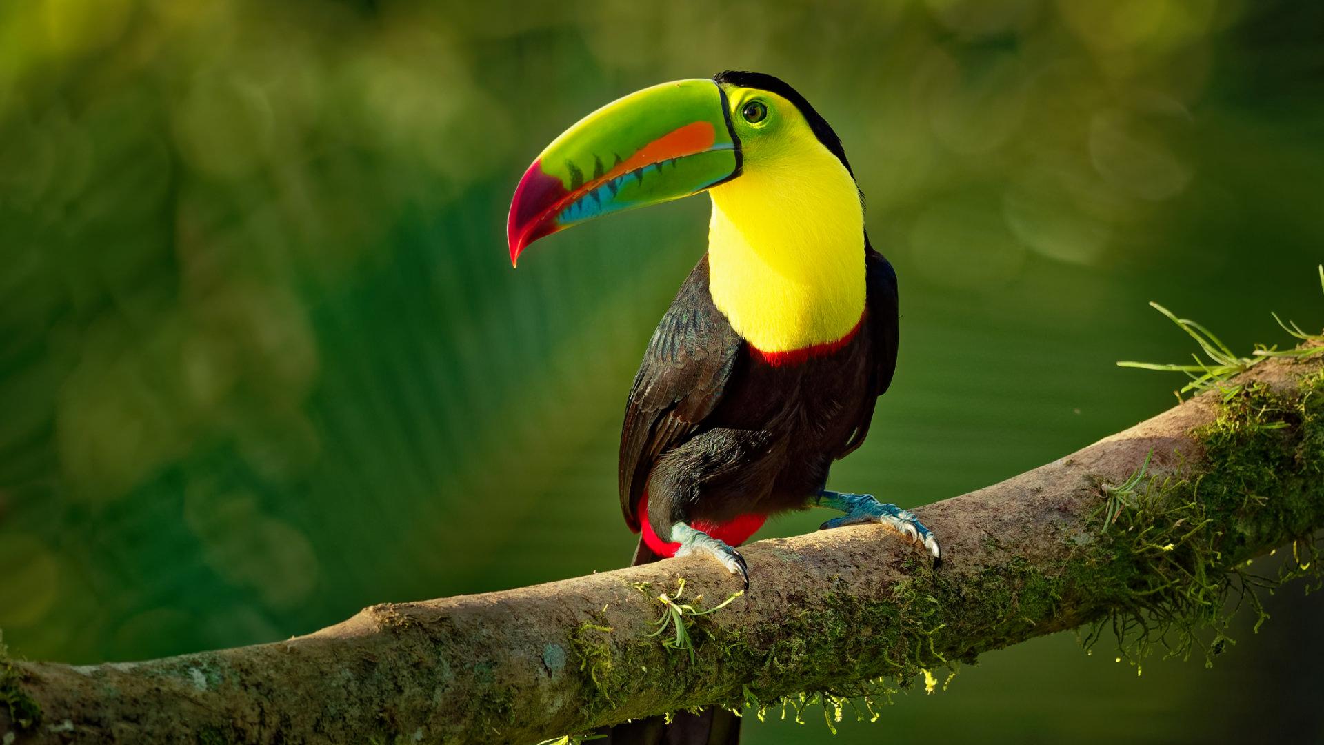 Belize'de Gece Orman Keşifleri, Cayo Bölgesi