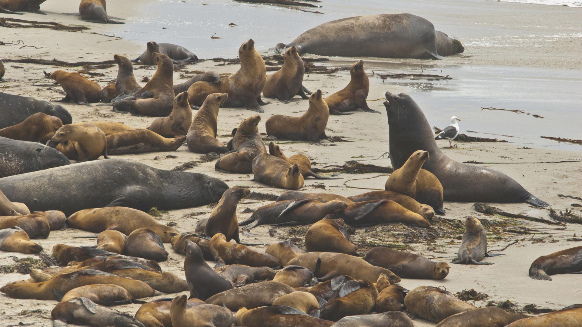 Öğretirken Eğlendiren Bir Doğa Macerası: Channel Adaları Ulusal Parkı