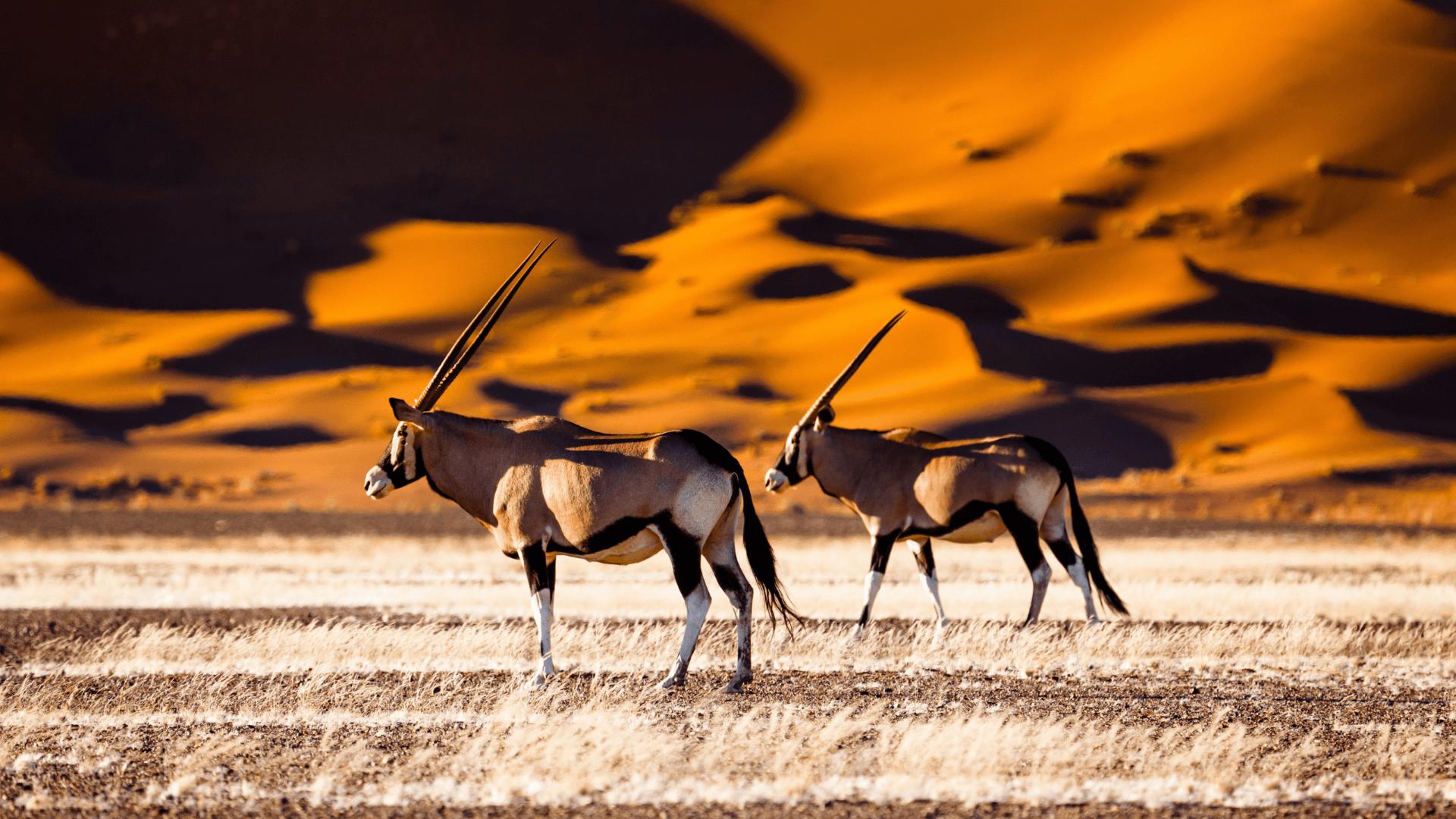 Dünyanın En Eski Çölü, Sossusvlei, Namibya