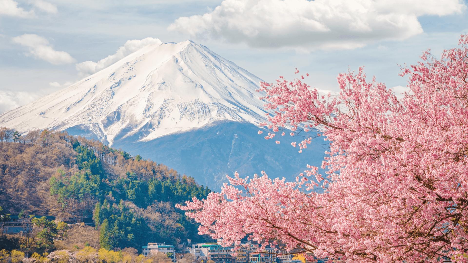 Japonya'da Bahara Merhaba, Sakura