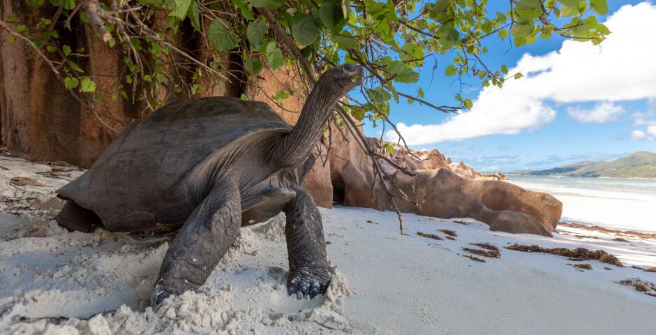 prison island zanzibar kaplumbağalar ile ilgili görsel sonucu